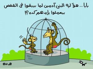 كاريكاتير القرود