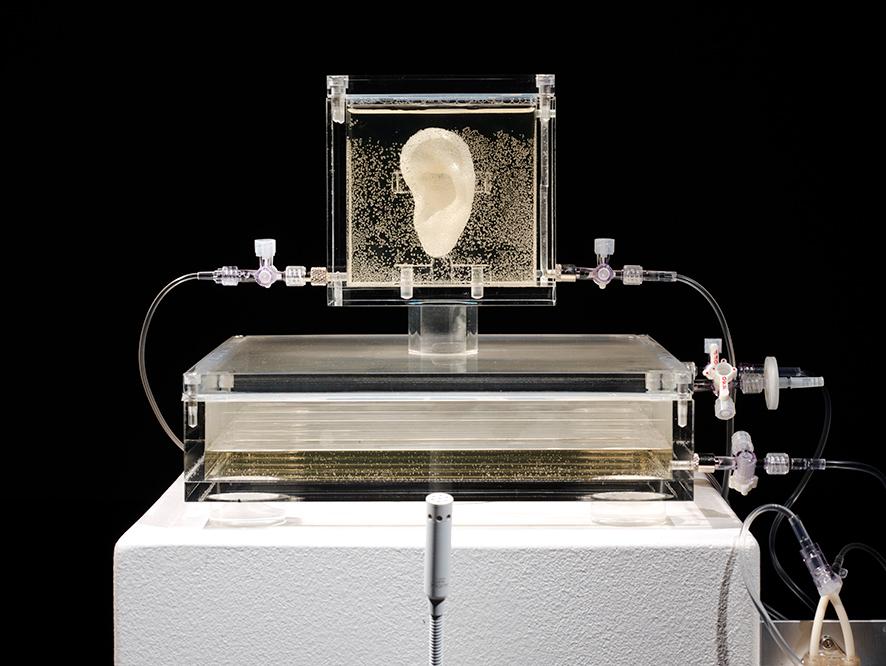 نموذج أذن فان جوخ داخل المعرض الألماني