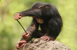 smart-monkey_3081493k