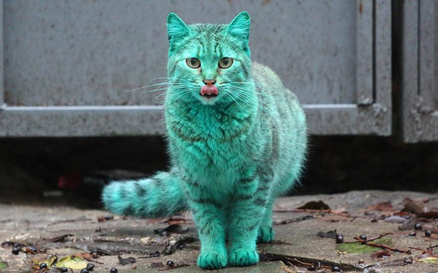 catgreen