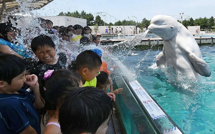 dolphen