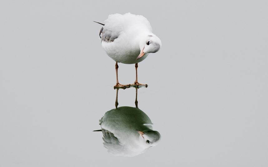 birdmirror