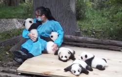 hugger-panda-nanny-best-job-protection-research-center-3