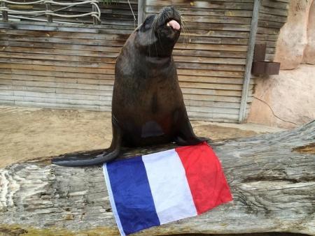 سبع البحر واطسون مع العلم الفرنسي في حديقة حيوان ببلدة أمنفيل بشرق فرنسا - صورة لرويترز تستخدم للأغراض التحريرية فقط. يحظر إعادة بيع الصورة أو الاحتفاظ بها في الأرشيف. توزع رويترز الصورة كما حصلت عليها تماما كخدمة للمشتركين.