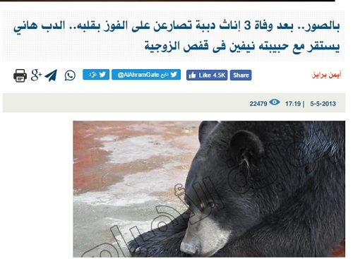 القصة المأساوية لصراع الدببة الثلاثة على الدب هاني ..كتبها أيمن برايز